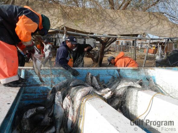 Pesca curvina_Yazmin marzo 2013