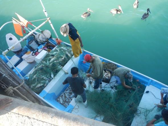Pesqueria Chano SF 2