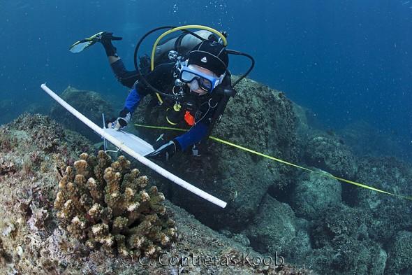 CCK_MG_3950Midiendo coral