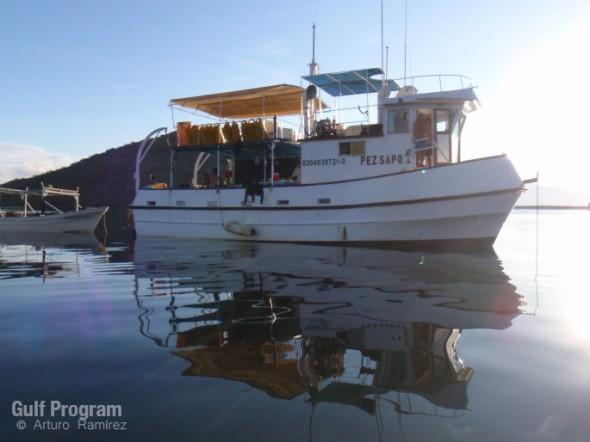 Foto9-Pez Sapo I en Puerto Escondido_ArturoRamirez(wm)