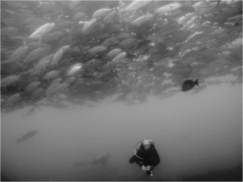 Me diving with the Bigeye jack at Cabo Pulmo