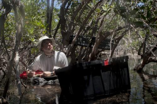 Matt sitting in mangroves (photo- Ramiro Aguilar)