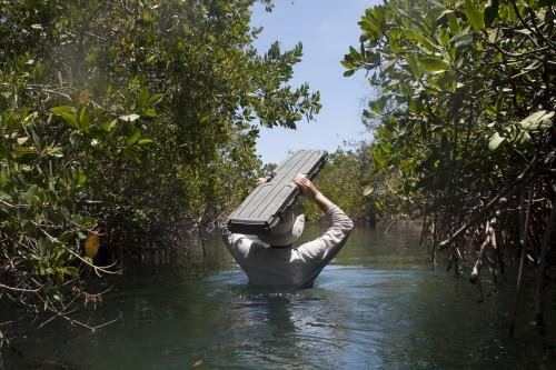 Matt walking out of mangroves with gray case (photo- Ramiro Aguilar)