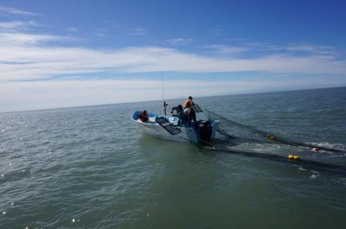 Panga trabajando con la red de arrastre. Foto: Unidos por el Futuro del Alto Golfo.