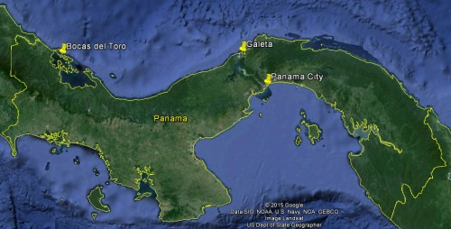 I visited field sites at Bocas del Toro and Isla Galeta on the Caribbean, and worked in the STRI Soil Lab in Panamá City.