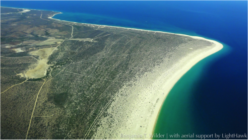 Punta Arena, looking to the NW. Note the lagunitas habitat on the left and the linear stabilized dunes in the middle.