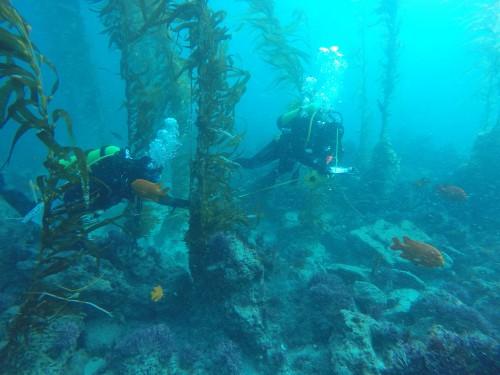 El grupo de científicos de Estados Unidos y México se reunieron en febrero a discutir avances en la ciencia y monitoreo de los bosques de kelp en el Pacífico. Foto: Arturo Ramírez.