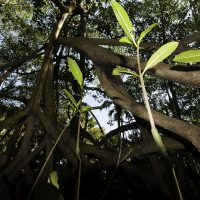 Like Mangrove Roots: Creating a Network of Collaborations in West Africa