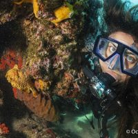 Can the diving sector help protect marine ecosystems?
